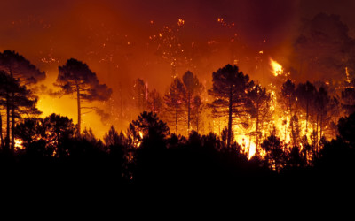 TENDING TO WILDFIRES