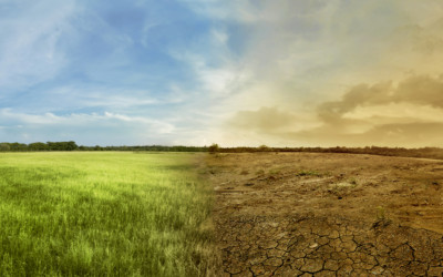 Tending to Climate Change